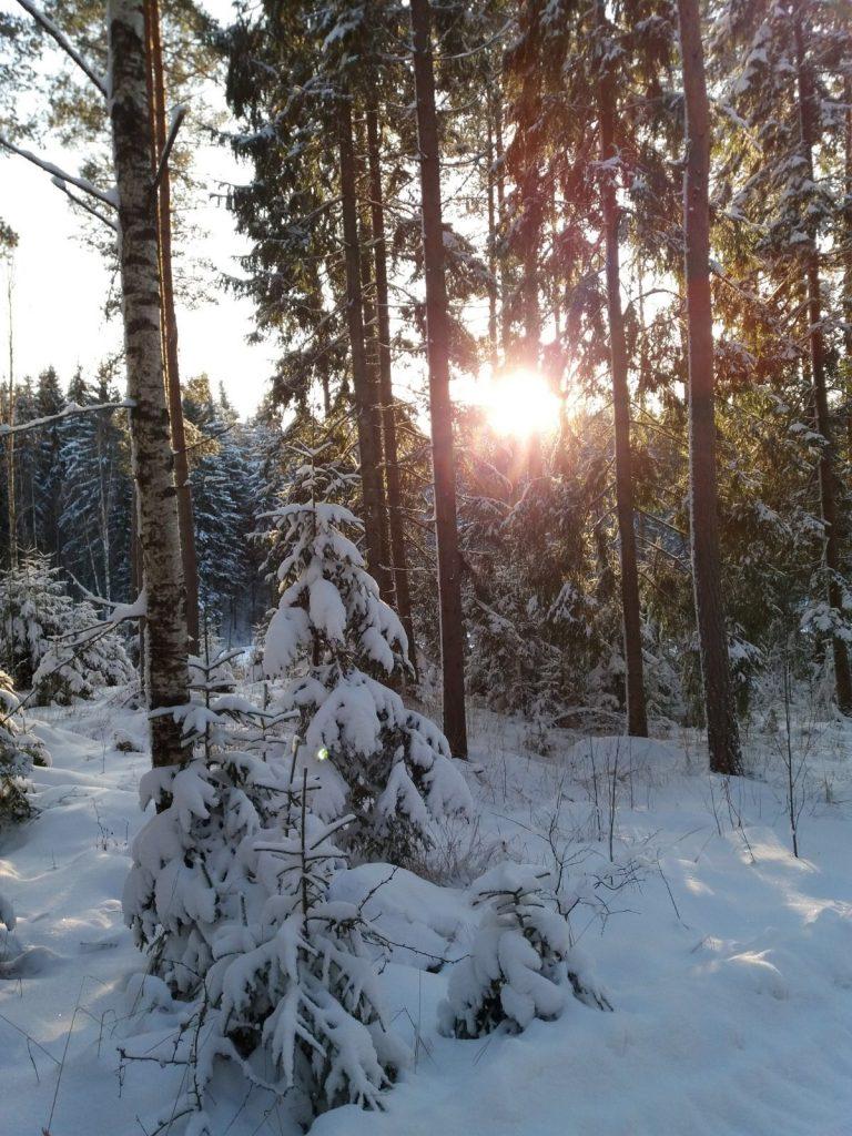 Aholanraitti_vuokramökkejä-hiihtoloma