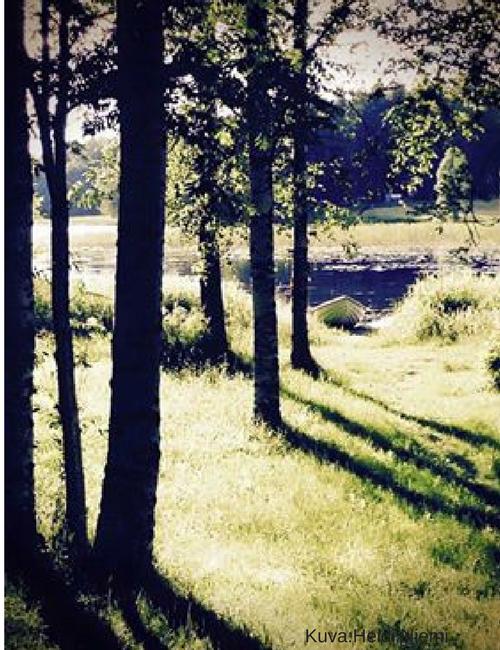 Aholanraitin-vuokramökit-koivikko-ranta-päijänne